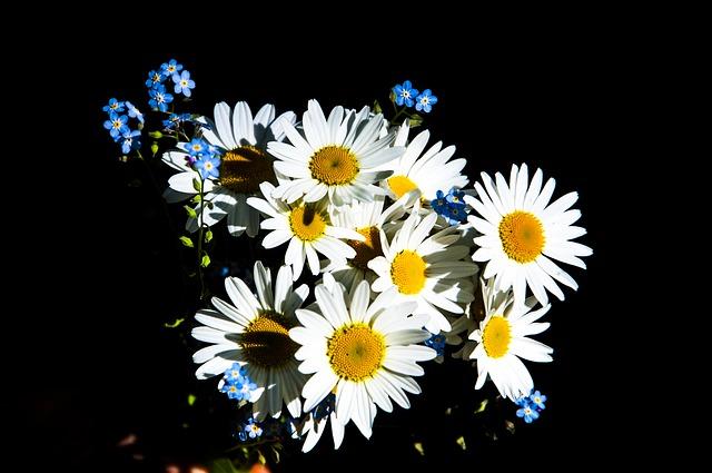 natrhané květiny