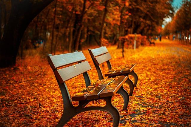 listy pod lavičkami