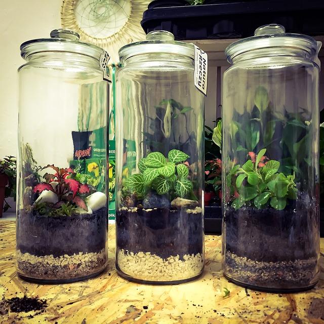 rostlinky ve sklenici