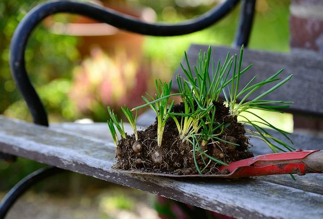 klíčící zelené rostlinky se zeminou.jpg